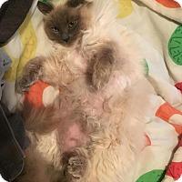 Adopt A Pet :: Agnes - Sacramento, CA