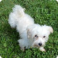 Adopt A Pet :: Samoa - Prole, IA