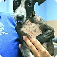 Adopt A Pet :: Lilo - Lufkin, TX