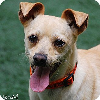 Terrier (Unknown Type, Medium) Mix Dog for adoption in Burlingame, California - Peter