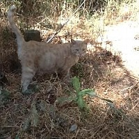 Domestic Shorthair Cat for adoption in Pt. Richmond, California - BABY