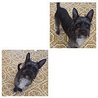 Adopt A Pet :: Izzy - South San Francisco, CA