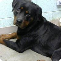 Adopt A Pet :: Ruru - Alpharetta, GA