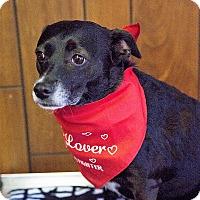 Adopt A Pet :: Zelda - Tavares, FL
