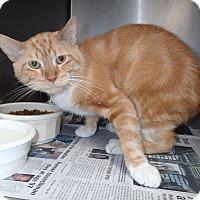 Adopt A Pet :: Simba - Newport, NC