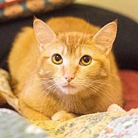 Adopt A Pet :: Sabrina - Morgantown, WV