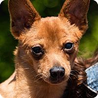 Adopt A Pet :: Jac - Oakland, CA