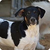 Adopt A Pet :: Lucky - New Boston, NH