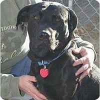 Adopt A Pet :: Noah - Alliance, NE
