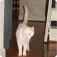 Adopt A Pet :: Rudy - Cincinnati, OH