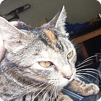 Adopt A Pet :: Anabel - FOUND IN MT PLEASANT - Acme, PA