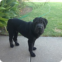 Adopt A Pet :: Duke - McLoud, OK