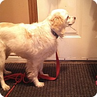 Adopt A Pet :: Dude - Hamilton, ON