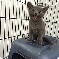 Adopt A Pet :: Myles - Speonk, NY