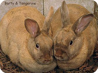 Palomino Mix for adoption in Santa Barbara, California - Barty & Tangerine