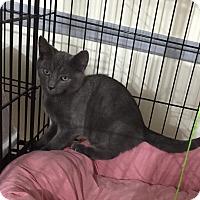 Adopt A Pet :: Kenny - Speonk, NY