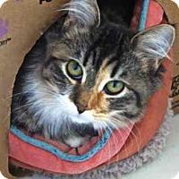 Adopt A Pet :: Millicent - Davis, CA
