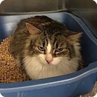 Adopt A Pet :: Sophia - Colmar, PA