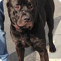 Adopt A Pet :: WUBBA - Oswego, IL