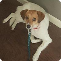 Adopt A Pet :: Mya 2016 (m/c) - Chesterfield, MI