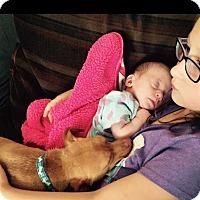 Adopt A Pet :: Parker - Mesquite, TX