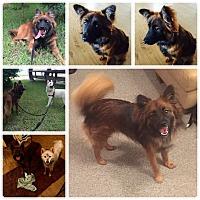 Adopt A Pet :: Tani - Chilliwack, BC
