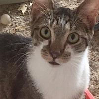 Adopt A Pet :: Kensington - Southlake, TX