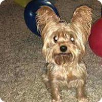 Adopt A Pet :: Dublin - Warsaw, IN