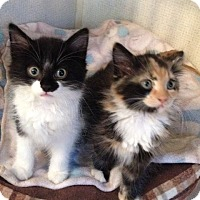 Adopt A Pet :: OREO MOO - Hamilton, NJ