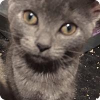 Adopt A Pet :: Kalven - Hamilton, ON