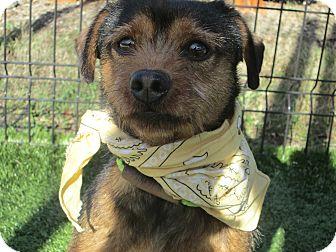 Terrier (Unknown Type, Medium) Mix Dog for adoption in Cumming, Georgia - Archie