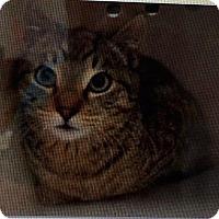 Adopt A Pet :: Provolone - Freeport, NY