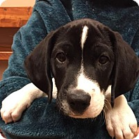 Adopt A Pet :: Captain - Woodstock, IL