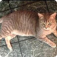 Adopt A Pet :: Dottie - Newtown, CT