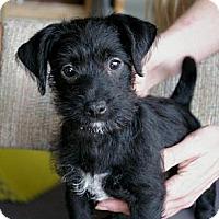 Adopt A Pet :: Juno - Sacramento, CA