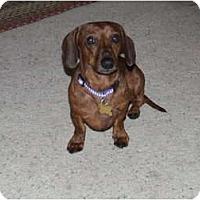 Adopt A Pet :: Rosco - San Jose, CA