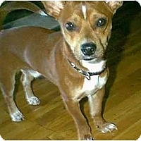 Adopt A Pet :: Copper - dewey, AZ