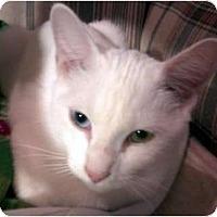 Adopt A Pet :: Paula - Jacksonville, FL
