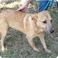 Adopt A Pet :: Scruffy - Glastonbury, CT