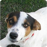Adopt A Pet :: SALLY - Scottsdale, AZ
