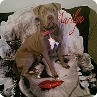 Adopt A Pet :: Xenia - Richfield, OH