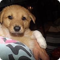 Adopt A Pet :: Ranger - Quincy, IN