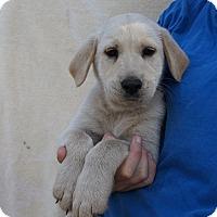 Adopt A Pet :: Scotch - Oviedo, FL
