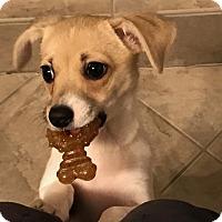 Adopt A Pet :: Rhea - Union Grove, WI