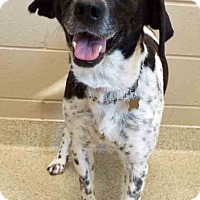 Adopt A Pet :: ADOPTED!!!   Ivy - Shorewood, IL
