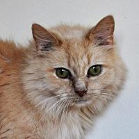Adopt A Pet :: Cookie - Berlin, MD