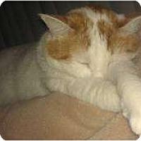 Adopt A Pet :: Butter-Rum - Franklin, NC