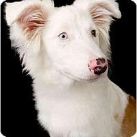 Adopt A Pet :: Bristal - Mesa, AZ