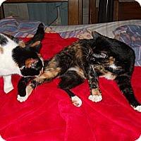 Adopt A Pet :: *Mimi - Winder, GA