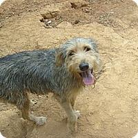 Adopt A Pet :: Hector - Eden, NC